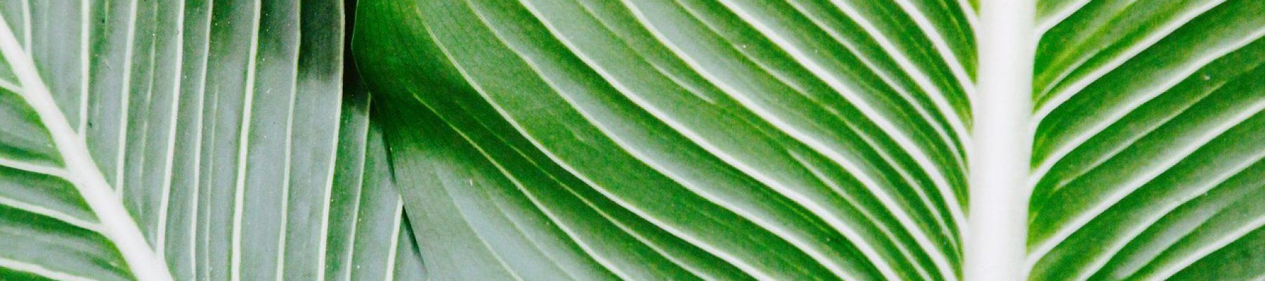 palm-1185677_1920